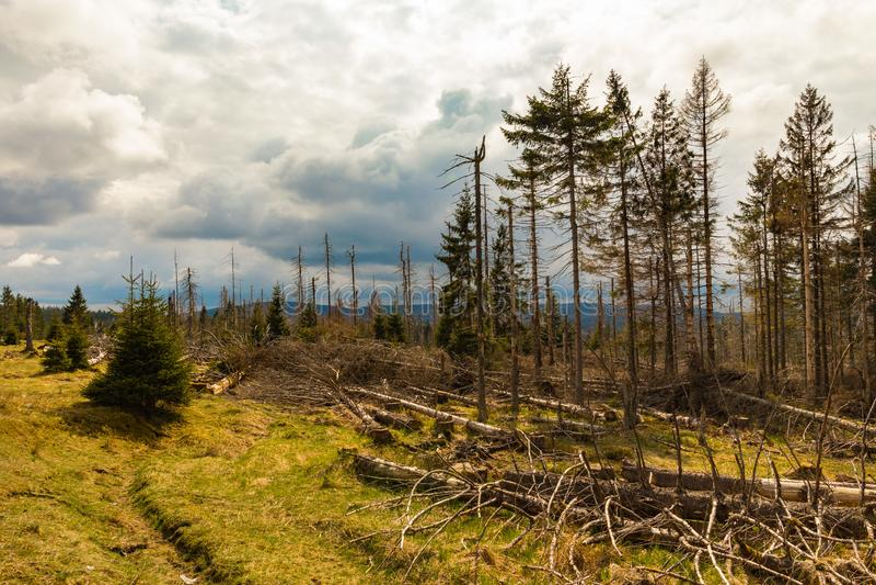 Παλαιός ξηρός άγριος και καταρριφθείς ξύλινος και νεφελώδης ουρανός στοκ φωτογραφία