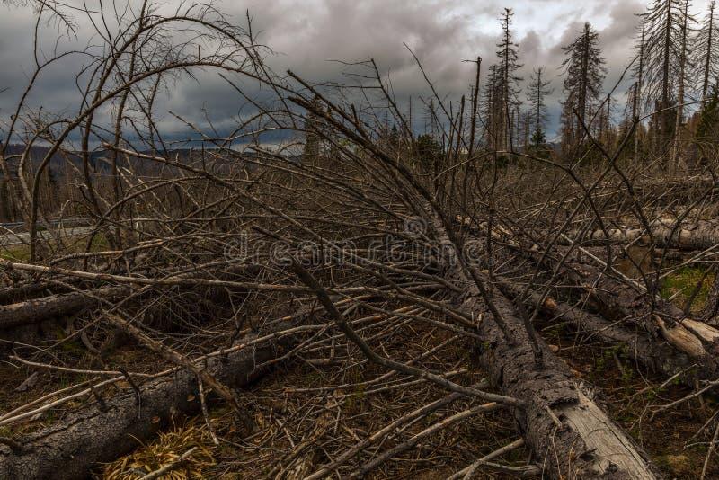 Παλαιός ξηρός άγριος και καταρριφθείς ξύλινος και νεφελώδης ουρανός στοκ φωτογραφίες με δικαίωμα ελεύθερης χρήσης