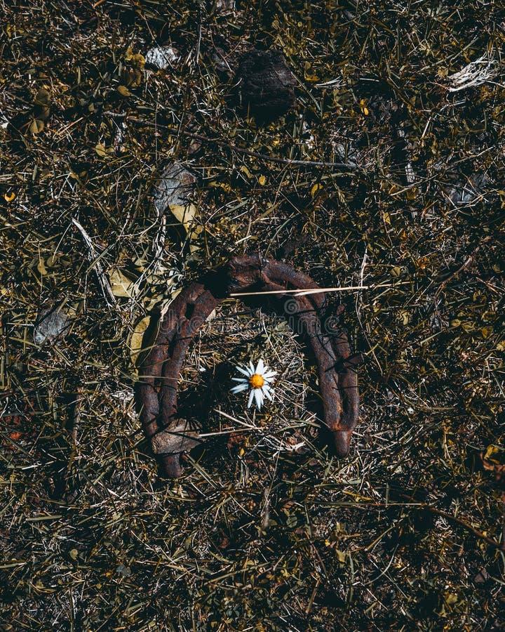 Παλαιός σκουριασμένος ένας πεταλοειδής και chamomile στοκ εικόνες