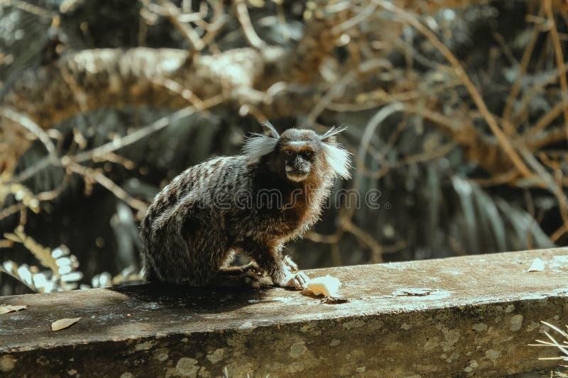 Παλαιός σοφός πίθηκος στοκ φωτογραφία με δικαίωμα ελεύθερης χρήσης