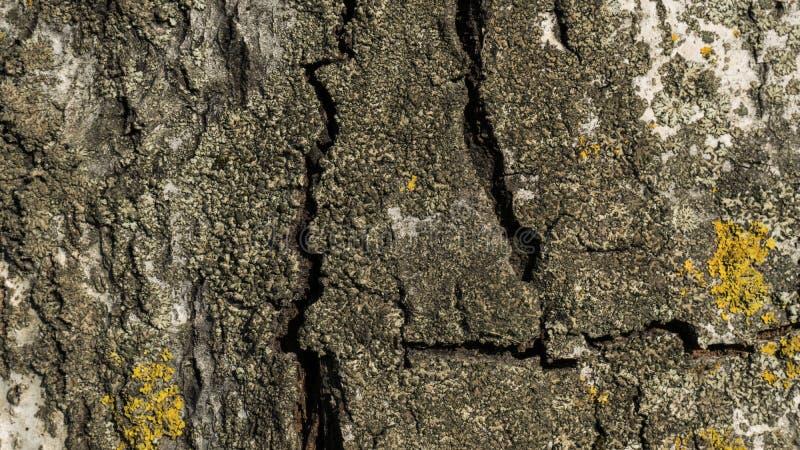 Παλαιός στενός επάνω φλοιών σημύδων στοκ φωτογραφία