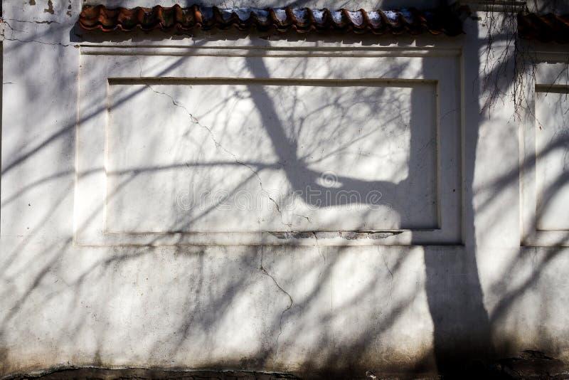 Παλαιός τοίχος με τη σκιά δέντρων στοκ φωτογραφία με δικαίωμα ελεύθερης χρήσης