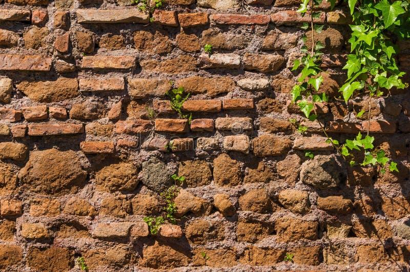 Παλαιός τοίχος με το υπόβαθρο εγκαταστάσεων στοκ φωτογραφία με δικαίωμα ελεύθερης χρήσης