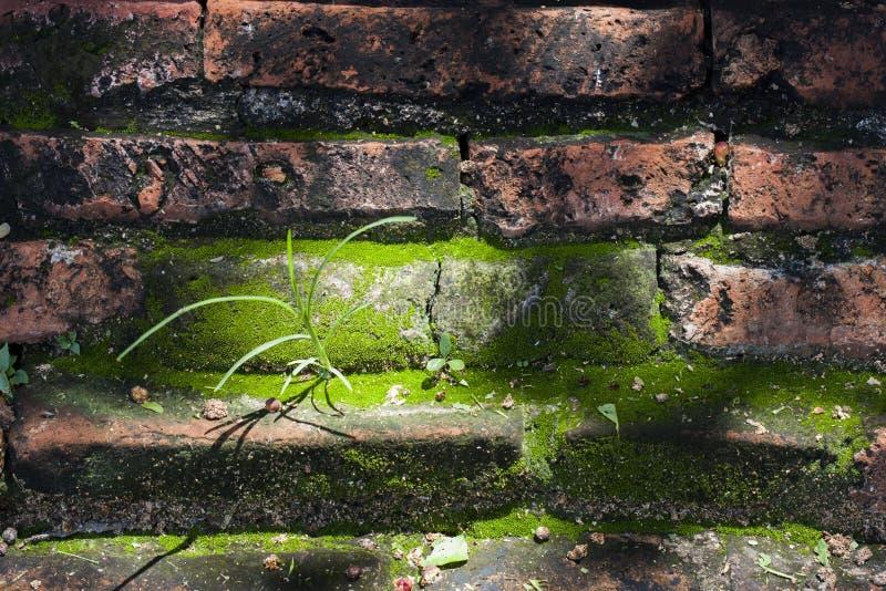 Παλαιός τοίχος που είναι πολύ παλαιός στοκ εικόνες