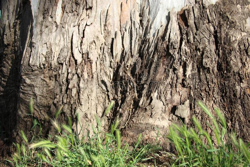 Παλαιός φλοιός δέντρων με την πράσινη χλόη στοκ εικόνες