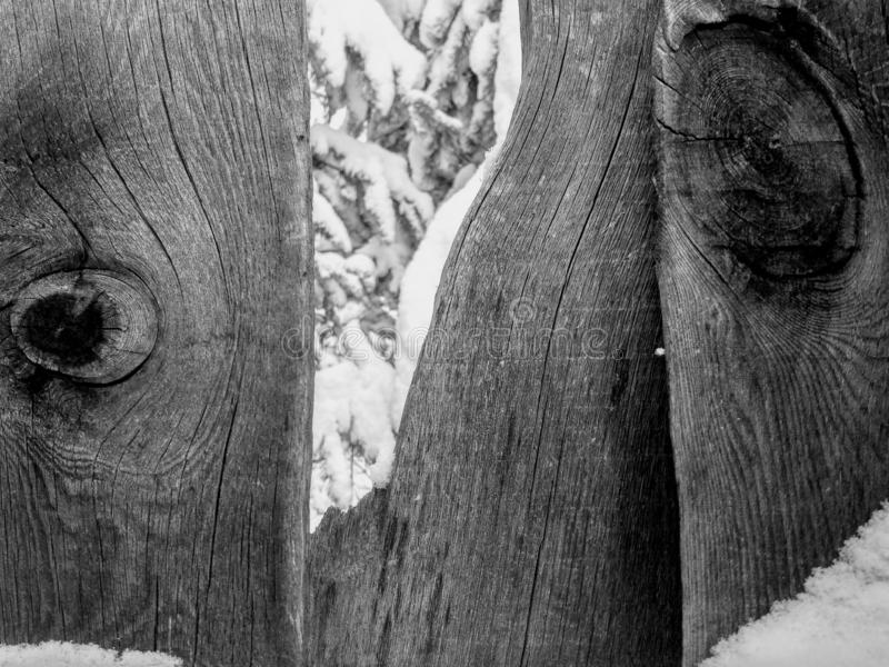 Παλαιός φράκτης, δάσος στο χιόνι στοκ εικόνα με δικαίωμα ελεύθερης χρήσης