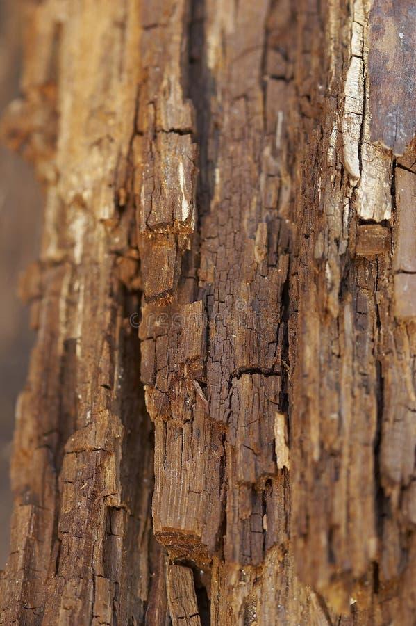 παλαιό δάσος στοκ εικόνα με δικαίωμα ελεύθερης χρήσης