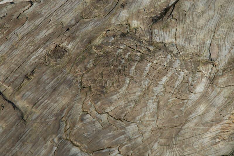 παλαιό δάσος Structire Στοκ Φωτογραφία