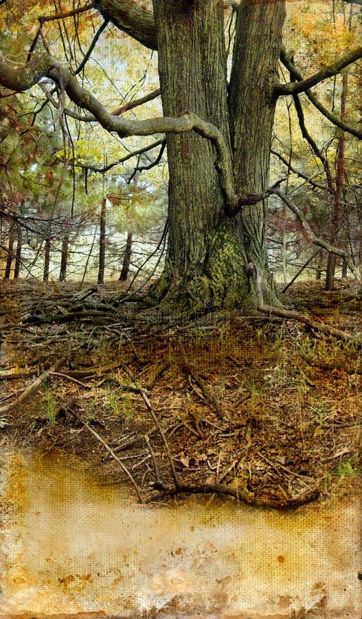 παλαιό δέντρο ανασκόπησης g στοκ φωτογραφία