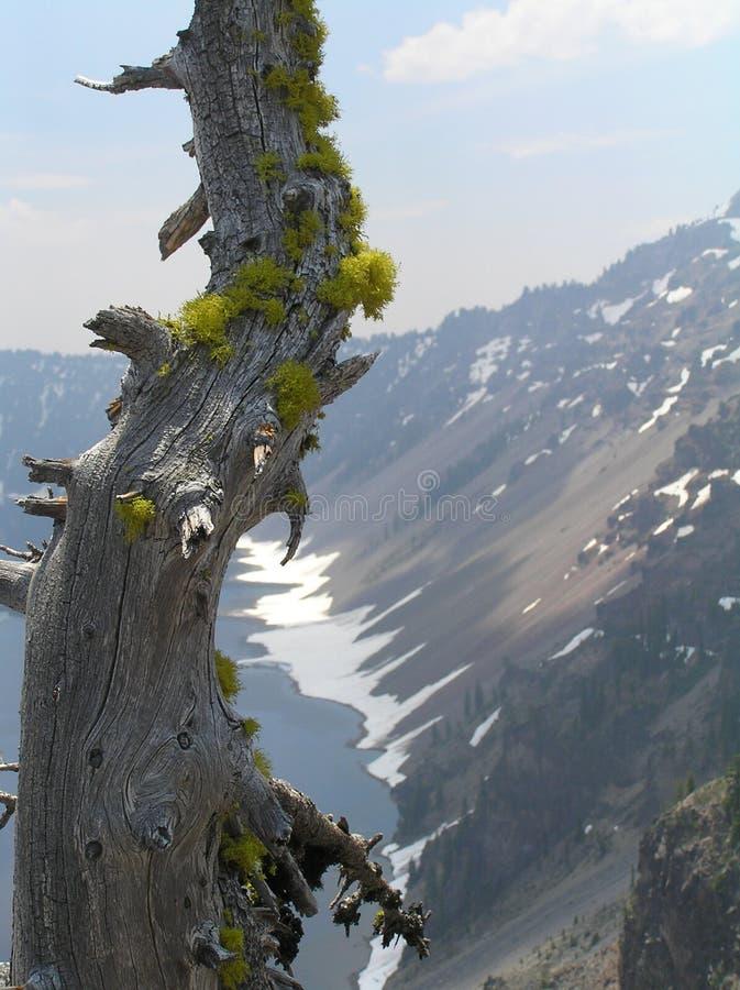 παλαιό δέντρο βουνών λιμνών &t στοκ φωτογραφία με δικαίωμα ελεύθερης χρήσης