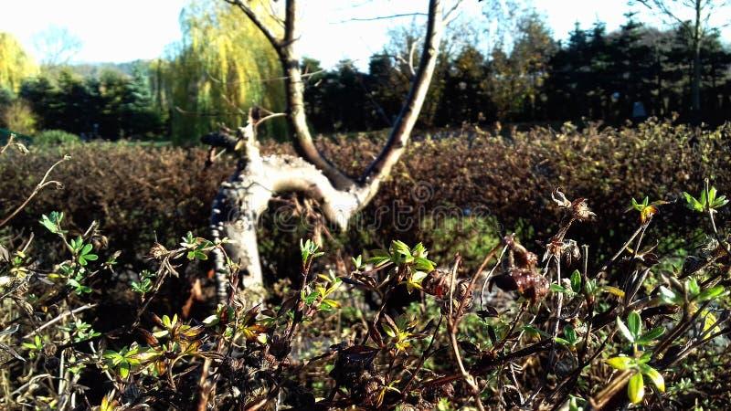 """Παλαιό δέντρο στα τέλη του φθινοπώρου στο λιβάδι â """"– 2 στοκ εικόνες"""