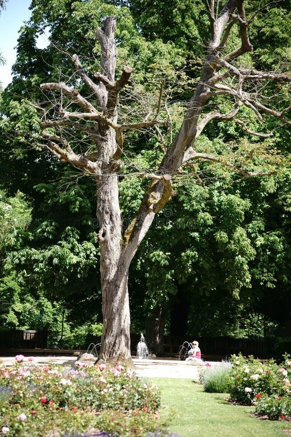 Παλαιό δέντρο στο πάρκο πόλεων στοκ φωτογραφία