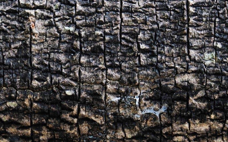 Παλαιό δέρμα δέντρων στοκ φωτογραφίες με δικαίωμα ελεύθερης χρήσης