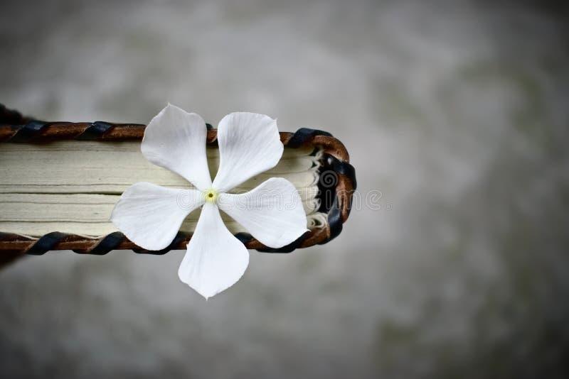 Παλαιό ημερολόγιο δέρματος με το λουλούδι μέσα στο παλαιό υπόβαθρο βιβλίων στοκ εικόνα με δικαίωμα ελεύθερης χρήσης
