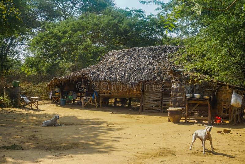 Παλαιό κατοικημένο ξύλινο σπίτι και φύλαξη των σκυλιών στοκ φωτογραφίες