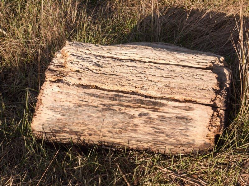 παλαιό ξύλινο κολόβωμα του τεμαχισμένου δέντρου στις τρύπες χλόης κοντά επάνω στοκ φωτογραφία με δικαίωμα ελεύθερης χρήσης