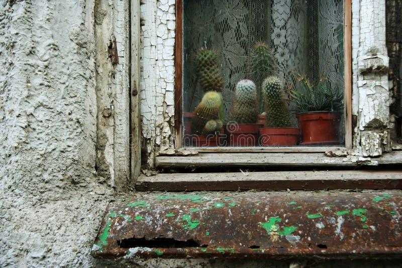 παλαιό παράθυρο κάκτων στοκ φωτογραφίες με δικαίωμα ελεύθερης χρήσης