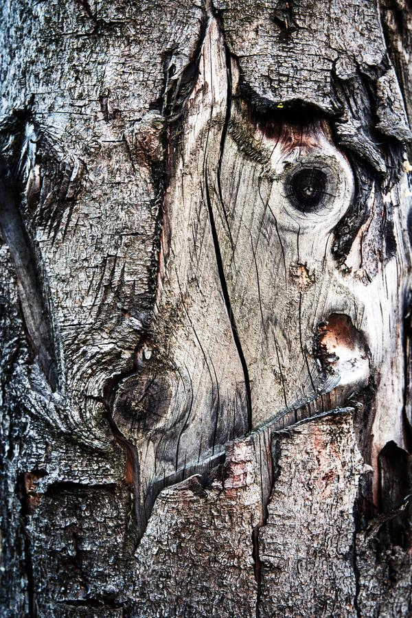 Παλαιό χαλασμένο κομψό ξύλο στοκ φωτογραφίες