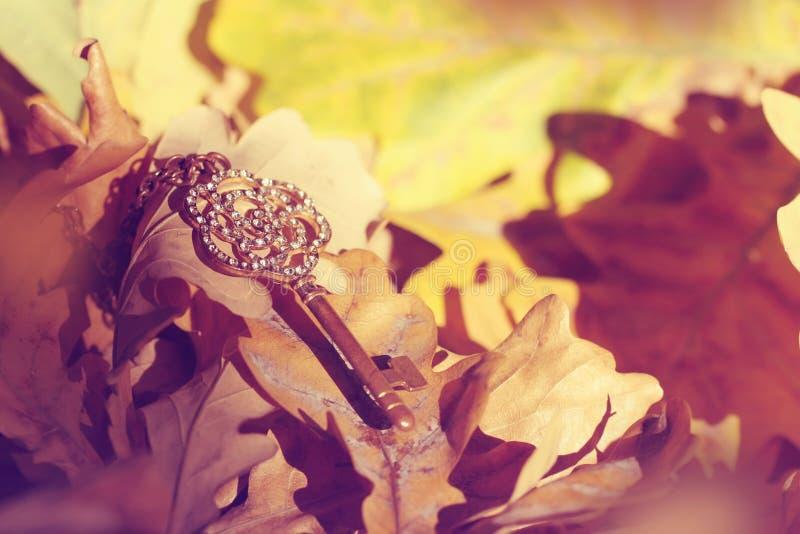 Παλαιό χρυσό κλειδί που χάνεται στο δάσος φθινοπώρου στοκ εικόνα