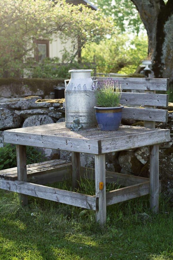 Παλαιό milkstand με το εκλεκτής ποιότητας καρδάρι γάλακτος και lavender στοκ εικόνες