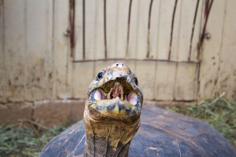 Παλαιό Tortoise στο ζωολογικό κήπο στοκ εικόνα