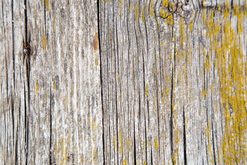 Παλιές ξύλινες σανίδες καλυμμένες με βρύα στοκ φωτογραφία με δικαίωμα ελεύθερης χρήσης