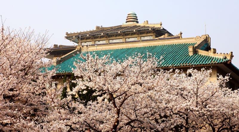 Πανεπιστημιούπολη Wuhan της Κίνας στοκ φωτογραφία με δικαίωμα ελεύθερης χρήσης