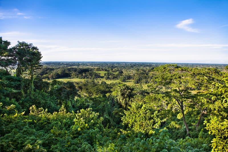 Πανοραμική άποψη στη μεξικάνικη ζούγκλα από το ναό Palenque, Μεξικό στοκ εικόνες