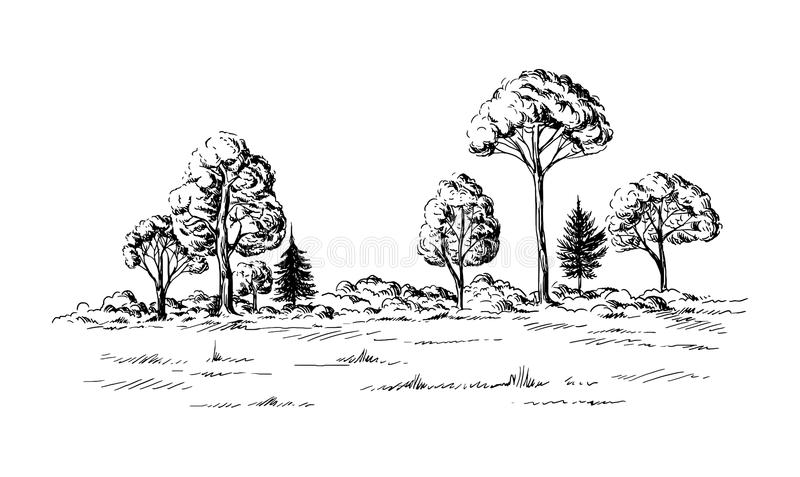 Πανοραμική άποψη του δάσους από τα κωνοφόρα δέντρα ελεύθερη απεικόνιση δικαιώματος