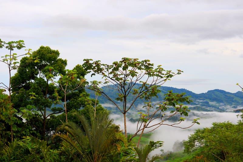 """Πανοραμική άποψη Ï""""Î¿Ï… δάσους και των ζουγκλών της Κόστα Ρίκα στοκ εικόνα με δικαίωμα ελεύθερης χρήσης"""