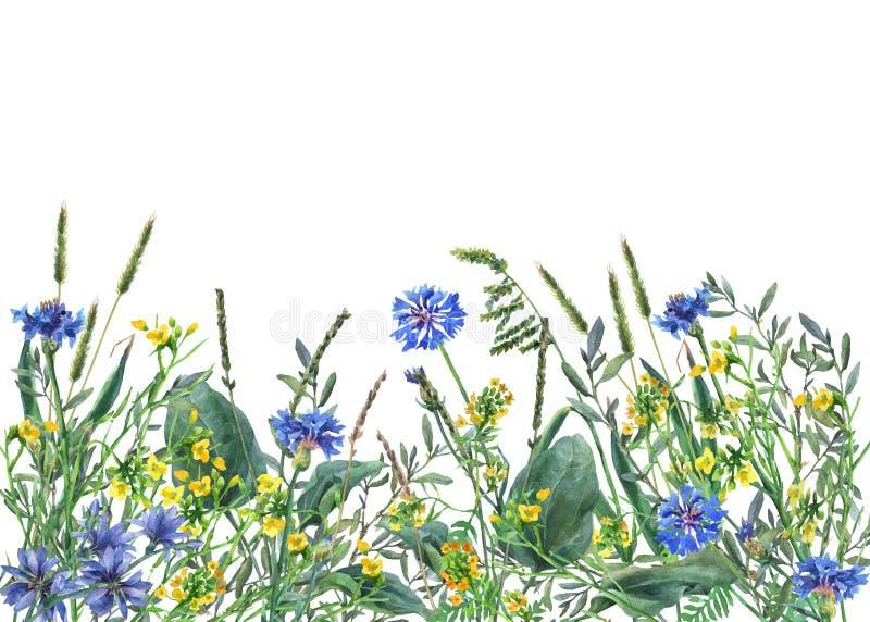 Πανοραμική άποψη των άγριων λουλουδιών και της χλόης λιβαδιών στο άσπρο υπόβαθρο διανυσματική απεικόνιση