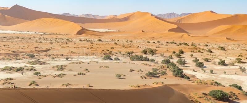 Πανοραμική άποψη των άμμος-αμμόλοφων στην επιφύλαξη φύσης Sossusvlei στη Ναμίμπια Αυτοί οι κοκκινωποί αμμόλοφοι στο κύριο τηγάνι  στοκ εικόνες με δικαίωμα ελεύθερης χρήσης