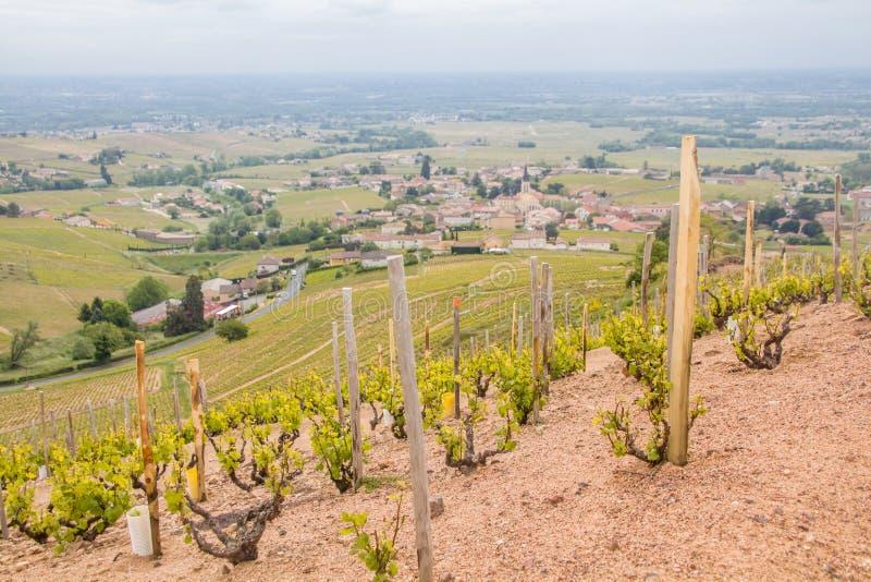 Πανοραμική άποψη των αμπελώνων που περιβάλλουν το γραφικό γαλλικό χωριό Fleurie στοκ εικόνα