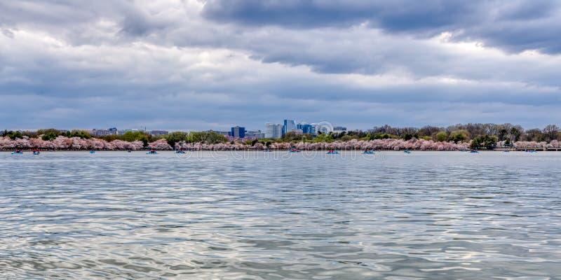 Πανοραμική άποψη των ανθών κερασιών του Washington DC στην παλιρροιακή λεκάνη στοκ φωτογραφίες με δικαίωμα ελεύθερης χρήσης