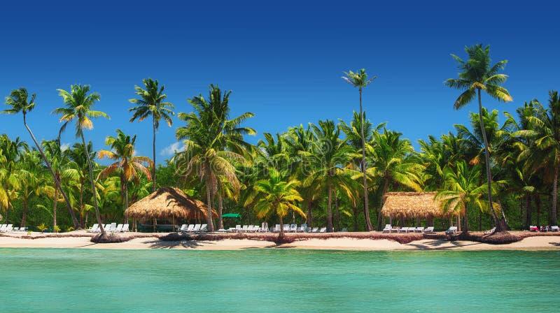 Πανοραμική άποψη των εξωτικών φοινίκων στην τροπική παραλία στοκ φωτογραφία με δικαίωμα ελεύθερης χρήσης