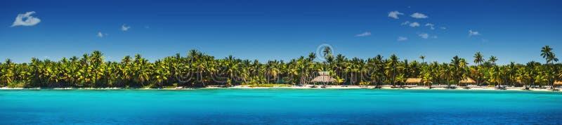 Πανοραμική άποψη των εξωτικών φοινίκων στην τροπική παραλία στοκ φωτογραφία