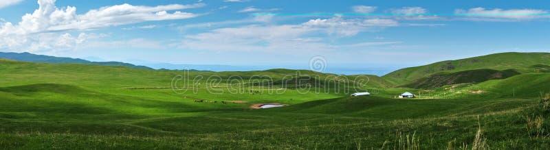 Πανοραμική άποψη των όμορφων πράσινων λόφων με λίγη λίμνη και των αλόγων στο λιβάδι στοκ εικόνες με δικαίωμα ελεύθερης χρήσης