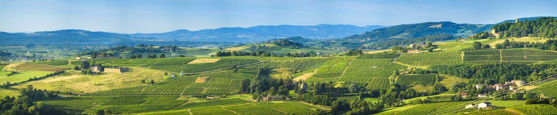 Πανοραμική άποψη Beaujolais του εδάφους, Γαλλία στοκ φωτογραφίες