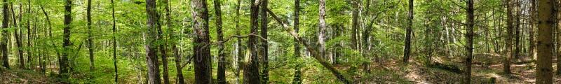 Πανοραμικός πυροβολισμός στο δάσος στοκ εικόνες
