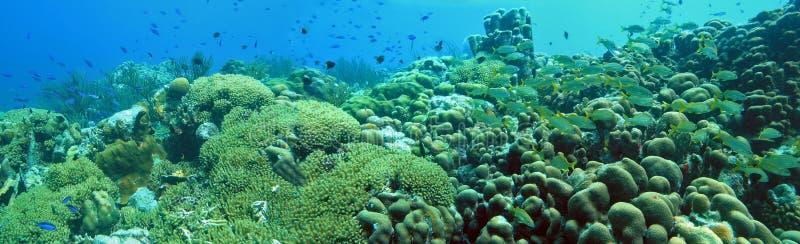 πανοραμικός υποβρύχιος στοκ εικόνες