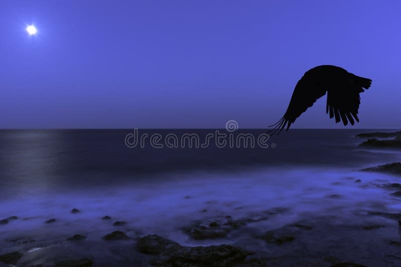 Πανσέληνος πέρα από τον Ατλαντικό Ωκεανό ένα πετώντας κοράκι - Los Cocoteros, Lanzarote στοκ φωτογραφία με δικαίωμα ελεύθερης χρήσης