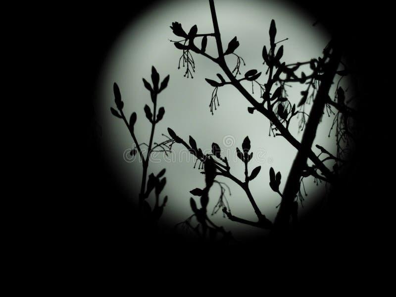 Πανσέληνος στον έναστρο νυχτερινό ουρανό στοκ εικόνα με δικαίωμα ελεύθερης χρήσης
