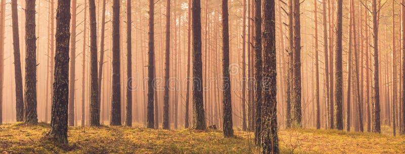 Πανόραμα δέντρων στοκ εικόνες