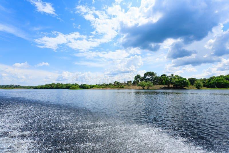 Πανόραμα από το τροπικό δάσος του Αμαζονίου, βραζιλιάνα περιοχή υγρότοπου στοκ φωτογραφία με δικαίωμα ελεύθερης χρήσης