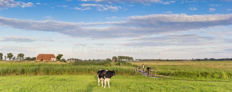 Πανόραμα μιας αγελάδας και των ανθρώπων σε μια πορεία ποδηλάτων στο Γκρόνινγκεν στοκ φωτογραφία με δικαίωμα ελεύθερης χρήσης