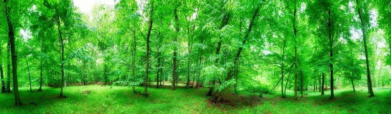Πανόραμα πράσινου δάσους στη βροχή στοκ φωτογραφία