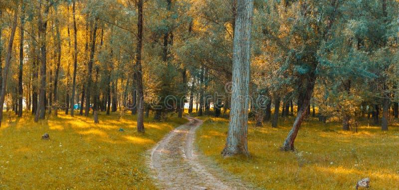Πανόραμα στο δάσος κατά τη διάρκεια του ηλιοβασιλέματος Ακτίνες ήλιων που έρχονται μέσω του θορίου στοκ φωτογραφία με δικαίωμα ελεύθερης χρήσης