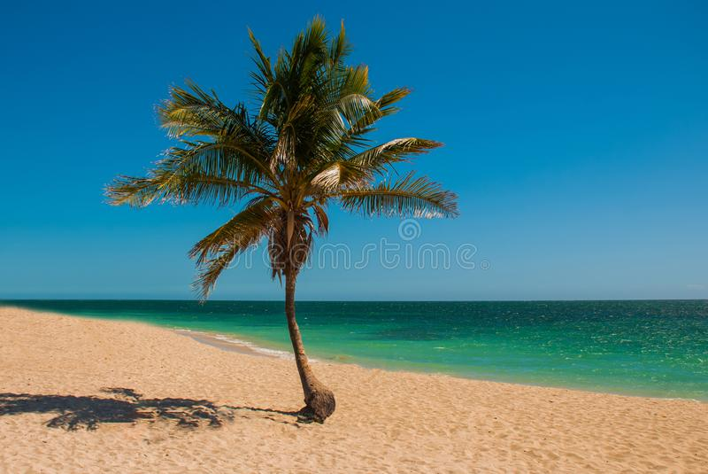 Πανόραμα της ευρείας, αμμώδους παραλίας σε ένα τροπικό νησί με έναν φοίνικα καρύδων Η όμορφη παραλία Playa Ancon κοντά στο Τρινιδ στοκ εικόνα με δικαίωμα ελεύθερης χρήσης