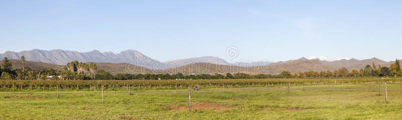 Πανόραμα της κοιλάδας κρασιού Robertson, δυτικό ακρωτήριο, Νότια Αφρική στο ηλιοβασίλεμα στοκ εικόνα