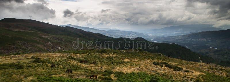 Πανόραμα της σειράς βουνών με τα άγρια άλογα που περιπλανώνται κοντά στοκ εικόνες
